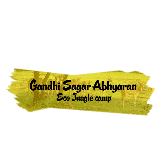 Gandhi Sagar Abhyaran Eco Jungle camp