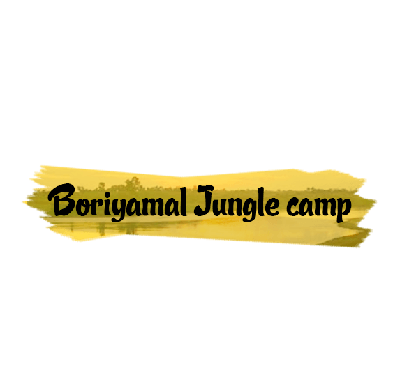 Explore Boriyamal Jungle Camp