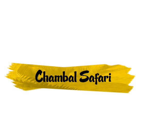 explore chambal safari